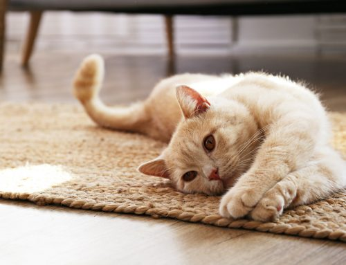 How To Improve Your Indoor Air Quality With Pets