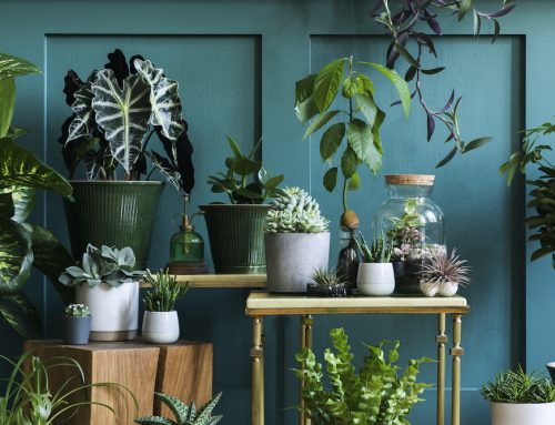 Which Plants Improve Indoor Air Quality?