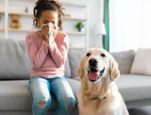 The Four Main Allergens in Your Cleveland Home